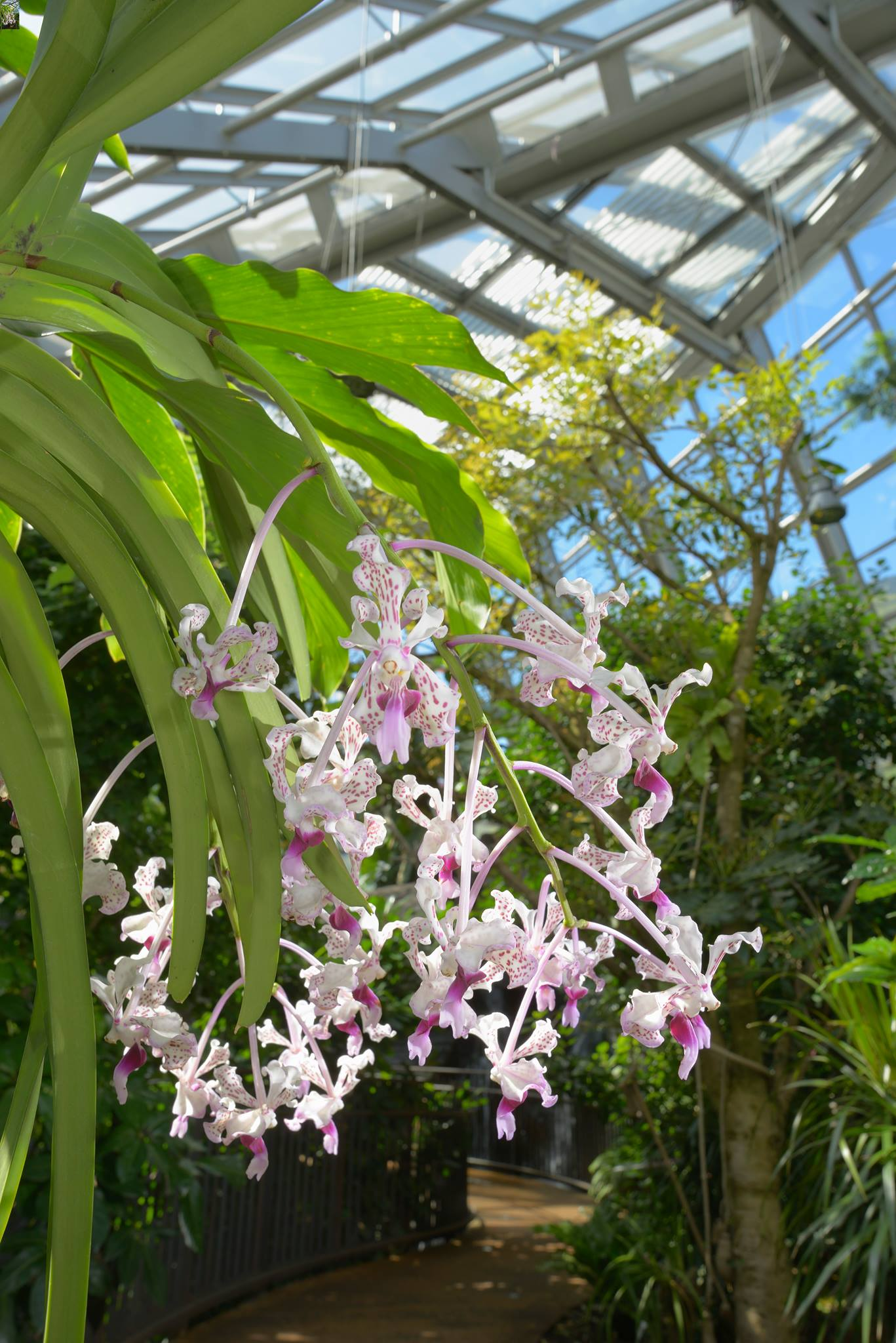 MUSE MUSEO DELLE SCIENZE | ORCHIDS@MUSE